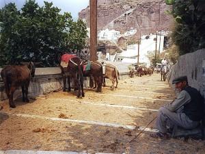 Santorini festivals met ezels tijdens een evenement